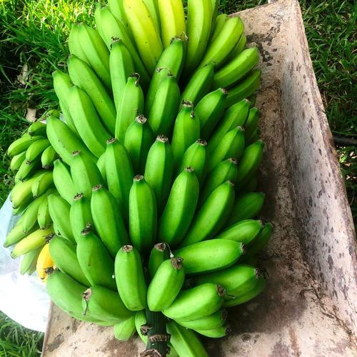 Goiás se destaca em 10° lugar no ranking de produtores de banana no Brasil
